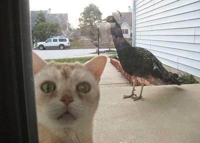 貓咪來敲門趴兔,我是小白啊放我進去