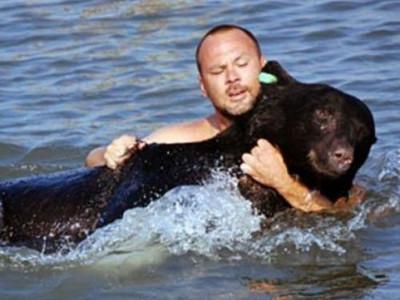 麻醉熊虛弱溺水 男子奮勇跳海救牠上岸