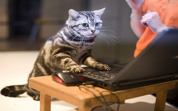 http://www.tapeta-kot-laptop.na-pulpit.com/zdjecia/kot-laptop.jpeg