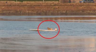 眼力大考驗!河中的衝浪板上躺著..?