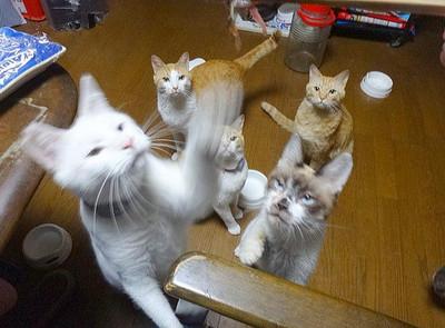 身為5隻貓的奴隸,在家吃生魚片像極限挑戰