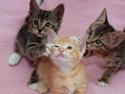 養貓的10個幻想與現實,先看清楚再養