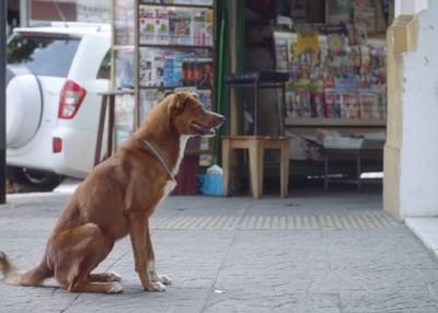 忠實陪伴主人的狗狗,牠會等你直到…