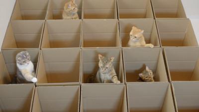 同時照料9隻貓咪,紙箱迷宮不可少啊
