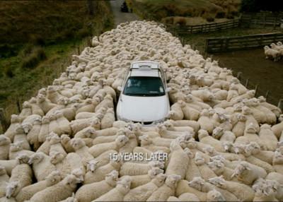 亂入羊打架,車殼被羊一頭撞掉了…