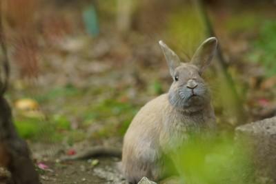 寺廟周圍全是打工兔兔,融化你的心♡