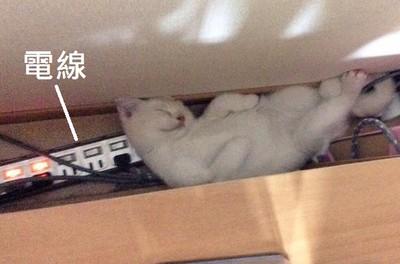 哪裡狹隘往哪睡,貓奴跪求殿下別嚇地球人