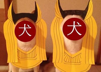 柴犬Cos埃及死神…雖然意外適合,但人家是胡狼啦