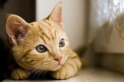 原來養貓有這10種好處,你會想知道的