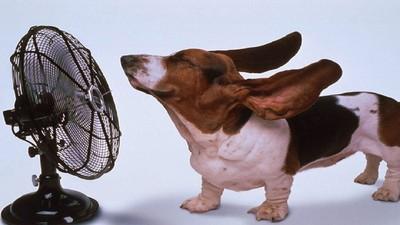 恁北熱到快往生啦!夏天讓人暴走的9個理由