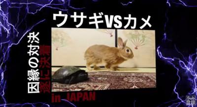 真實版龜兔賽跑!這次兔子會再被烏龜幹掉嗎?