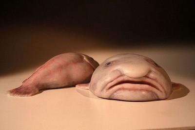 水滴魚主題咖啡廳問世!這麼醜到底誰會想去啊?
