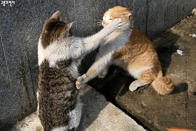 野貓楚楚可憐+霸氣獨立反差萌,意圖使人變貓派
