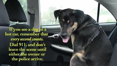 大熱天別把狗狗關車內!連人類都撐不過8分鐘