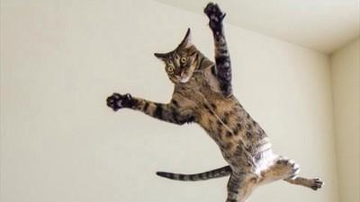 俄羅斯限定防身術...貓咪竟然是武器!