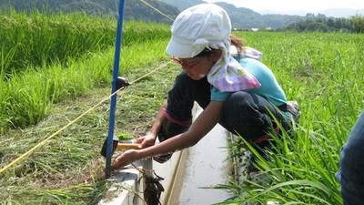 好概念無價!不忍青蛙溺死,日本小學生造青蛙自救纜