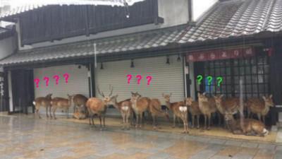 一群鹿站在商店門口…背後原因很單純