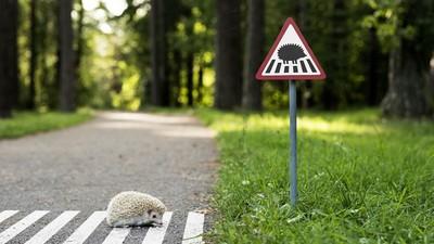 小動物也是市民!立陶宛小路標計畫給動物們留路