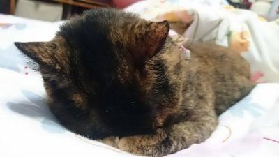 貓奴感覺幸福的8瞬間~其實是種受虐的享受