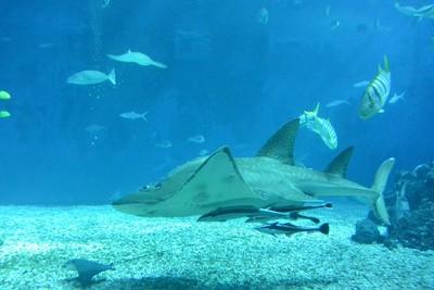 他懷疑海生館鯊魚吃素 專家曝真相