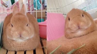 幸福肥一擺變出幾何圖形,萌兔都變臭臉王
