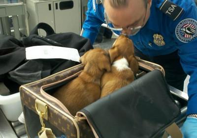 比人還常搭飛機的小狗,前提得有位守法的主人