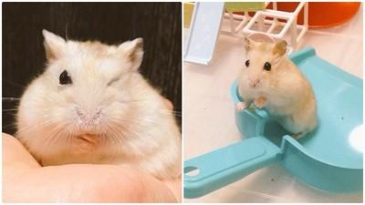 又打擾我掃除~哥養的不是鼠而是撒嬌滿點調皮鬼