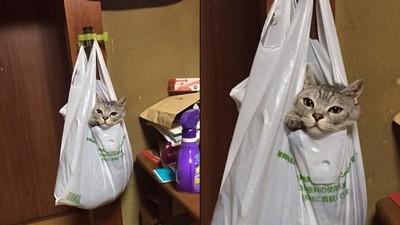 回家時發現貓咪掛在塑膠袋裡,還一臉很舒適的表情