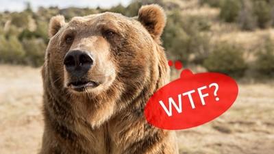 黃石公園奇葩遊客留言:我都沒看到熊,好好訓練嘛