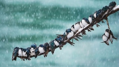 當天氣開始冷,毛茸茸鳥團子出沒注意