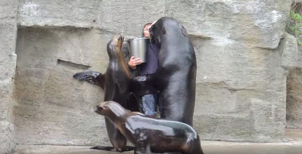 海獅霸氣壁咚飼育員:「給我魚,不然就強吻你」