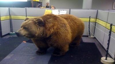辦公室限定惡整法,打開門竟然有熊!
