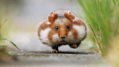 鼠鼠們是幸福顏藝王,任何表情治癒力都MAX