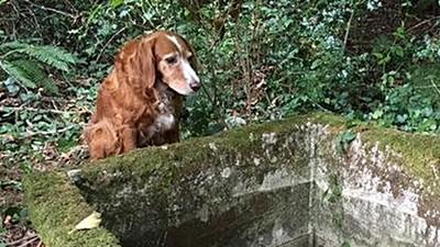 森林裡有隻狗狗站在儲水槽旁,走近才明白牠為何不走