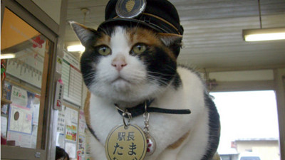 守護貴志車站8年,永遠的「貓站長」小玉