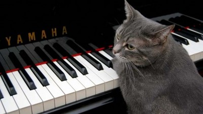 NO唬爛!虎斑喵=協奏首席,牠的琴聲全世界都愛