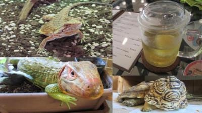 日本冷血動物咖啡館…旁邊有蛇我喝不下啦QQ