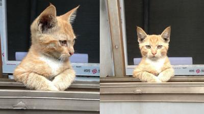 喵咪攀窗俯瞰世界…但誰准你偷拍的`皿´