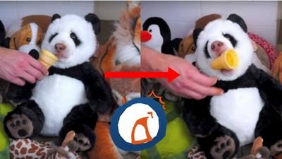 甜筒湊到熊貓娃娃前…下一秒牠竟然張口咬了