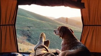 帶你的狗露營吧!有牠陪伴後的風景大不同
