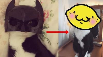 蝙蝠俠養的貓?脫下面具後根本一模一樣啊