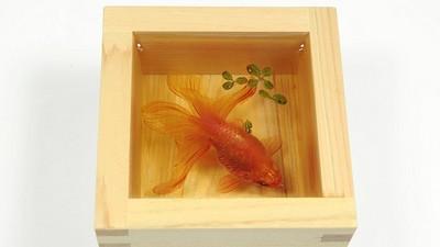可憐小金魚被透明樹脂封存..別哭,你再看一次