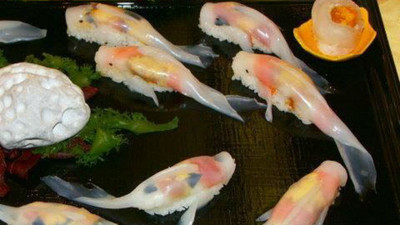 可憐小鯉魚被做成壽司…先別哭!你看仔細點