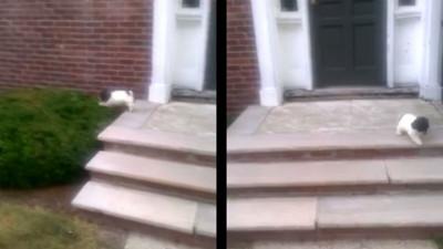 小汪汪飛身「跳樓」!只因為下樓梯太可怕