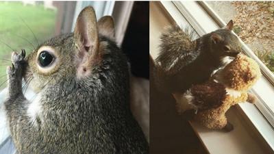 IG最紅松鼠,興趣是…趴窗邊偷窺路人