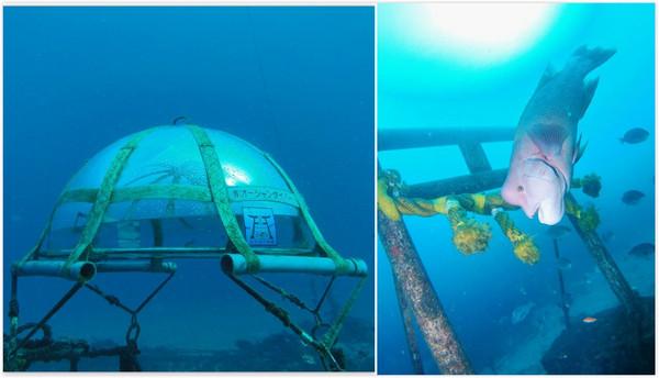 要參拜得潛到海底!在水中神社和鯨鯊共游超療癒der~