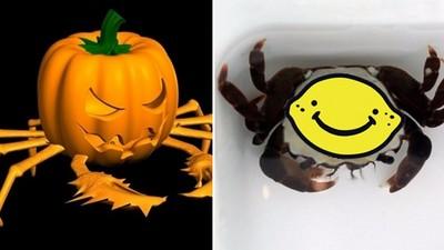 背上有顆南瓜燈!詭異小螃蟹意外成為萬聖節主角