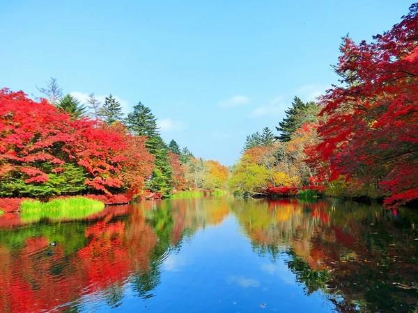 火紅楓葉在樹梢間燃燒!日本「輕井澤」3大必去賞楓地