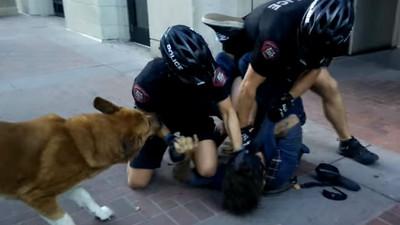 無論他好與壞,狗狗心中都是該拼命守護的主人