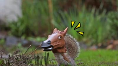 小松鼠怎長出馬頭?! 神秘餵食器根本巫術道具啊